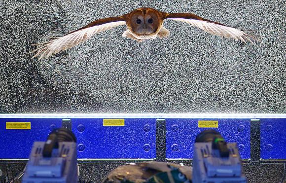 מצלמות מתעדות את הבועות המוארות ברגע המעבר של הינשוף דרכן | מקור: Royal Veterinary College