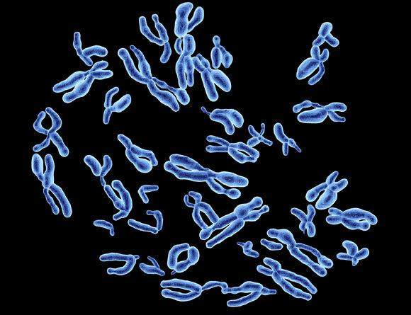 כרומוזומים של אדם | איור: Alfred Pasieka / Science Photo Library