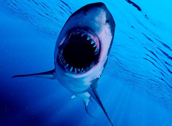 כריש חושף שיניים