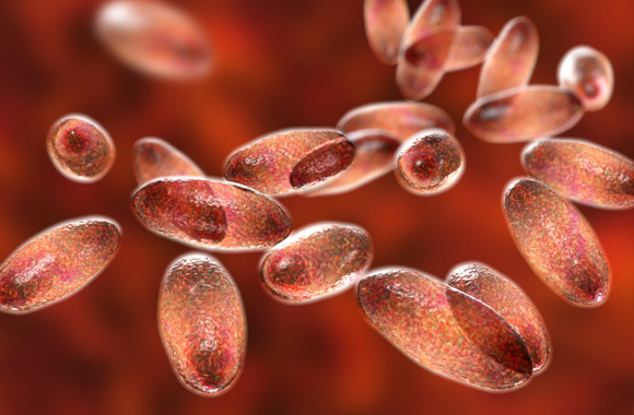 חיידקי ירסיניה פסטיס, הגורמים למחלת הדבר | Kateryna Kon, SPL