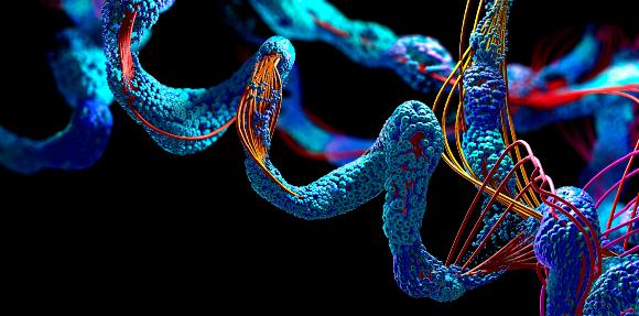כל חלבון מורכב משרשרת שרק לאחר ייצורו היא מתקפלת למבנה פעיל. שרשרת חומצות אמינו | איור: CHRISTOPH BURGSTEDT / SCIENCE PHOTO LIBRARY