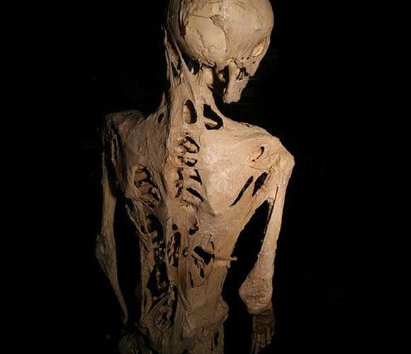 תרם את גופתו המאובנת למדע. השלד של הארי איסטלק בתצוגה במוזיאון מוטר | מקור:Joh-co, ויקיפדיה
