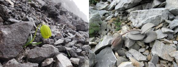 פריטילריה מוסווה (ימין) וללא הסוואה (שמאל) | צילום: Yang Niu