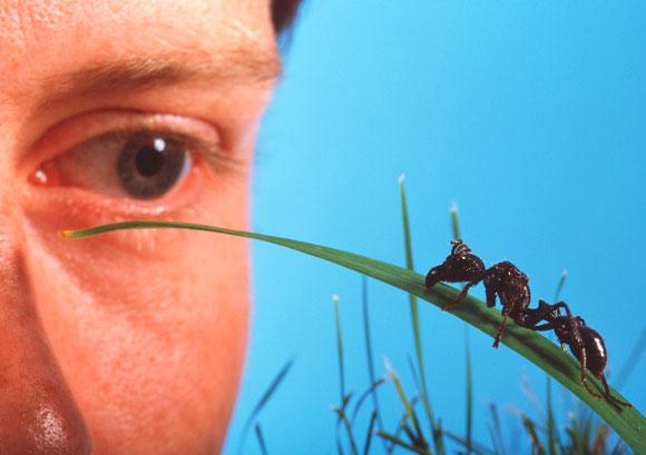 אדם מתבונן בנמלה על עלה עשב | Science Photo Library