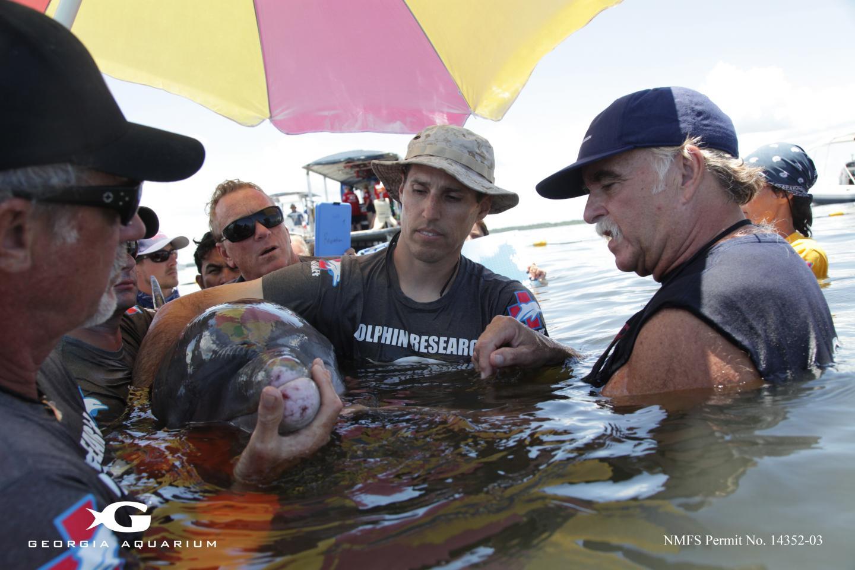 איסוף דגימות חיידקים מדולפינים | Georgia Aquarium, Addison Hill