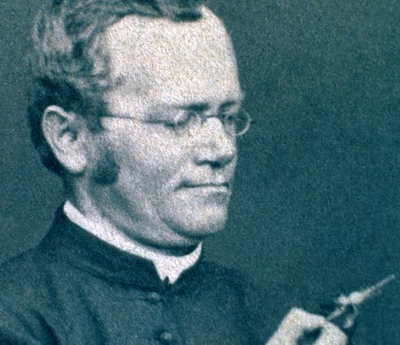 עבודתו פורצת הדרך זכתה להכרה המגיעה לו רק לאחר מותו. גרגור מנדל | מקור: Science Photo Library