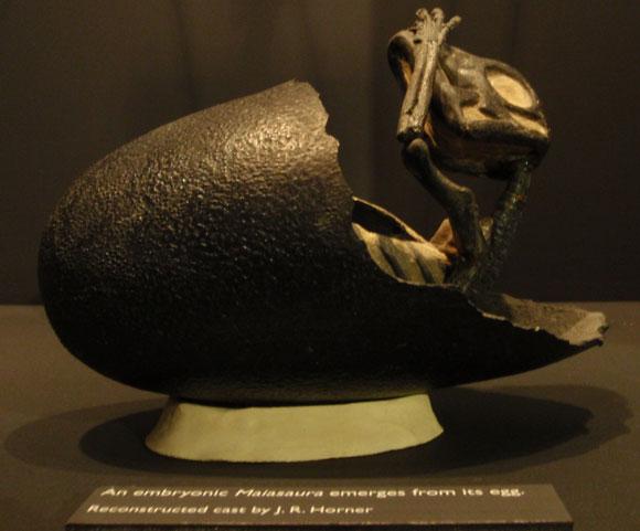 פסל של דינוזאור מהסוג מיאזאורה בוקע מביצתו | צילום: Muesum of the Rockies, Wikipedia