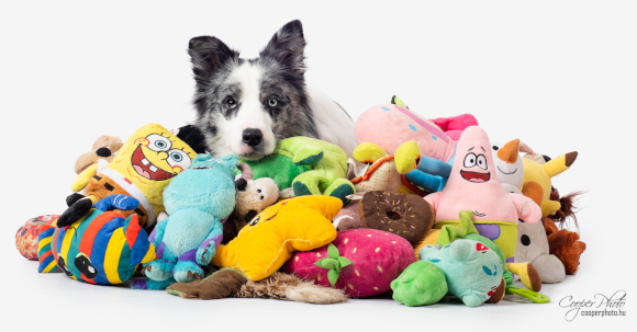 זוכר את כל השמות שלמד. הכלב מקס וחלק מהצעצועים שלו | קרדיט: Cooper Photo