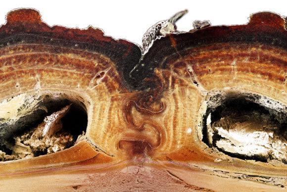 חתך של התפר המחבר את כנפי החפייה    צילום: Jesus Rivera / UCI
