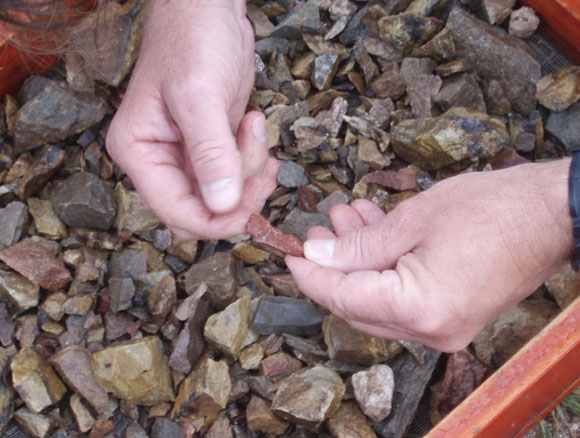 קליפות מאובנות של ביצי יען | Matthew Collins