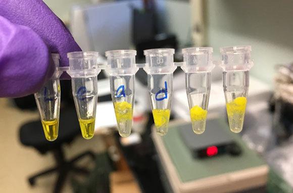 חוקר מראה למצלמה מבחנות ובהן דגימות מים, מוכנות לבדיקה   Northwestern University