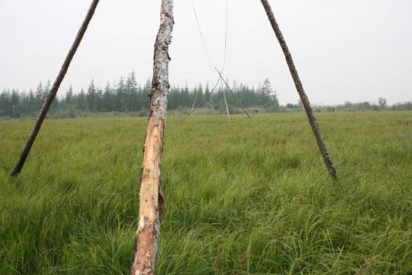 ערבות עשב משוחזרות בפארק הפליסטוקן | צילום: Enryū6473, ויקיפדיה