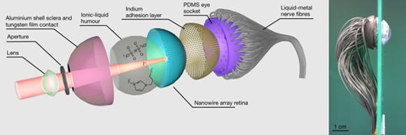 תרשים סכמטי של מבנה העין המלאכותית (משמאל) וצילום של העין עצמה (מימין) | מקור: אוניברסיטת הונג-קונג למדע ולטכנולוגיה, HKUST