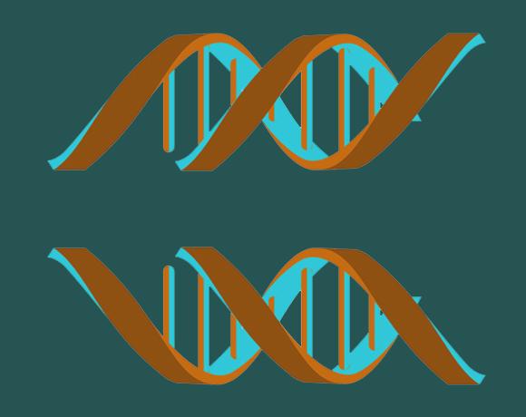 רק צורה אחת נכונה. DNA ימני, שקיים בטבע (למטה) ו-DNA שמאלי | איור: Shutterstock