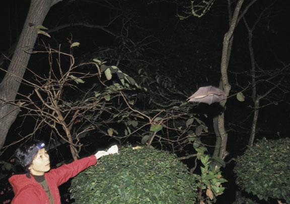 שי משחרר עטלף אחרי בדיקת דם