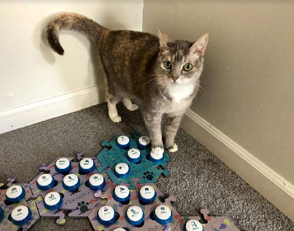 החתול בילי עם לוח כפתורים | FluentPet