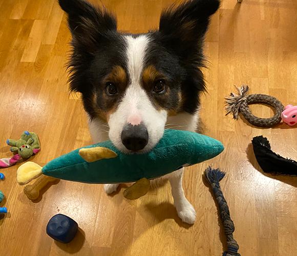 ויסקי עם צעצוע הדג שהתבקשה להביא | קרדיט: Helge O. Savela