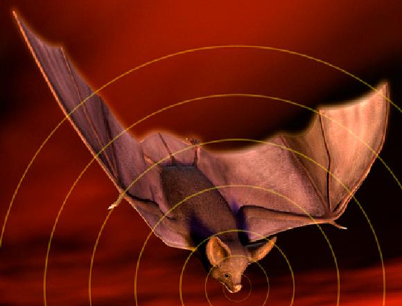 אילוסטרציה של איכון הד של עטלף | Victor Habbick Visions, Science Photo Library