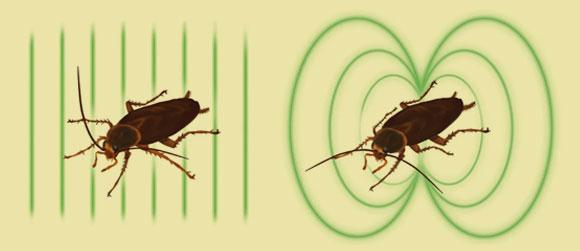 ההבדלים בשדה המגנטי של תיקנים מתים וחיים נובע כנראה מהתגבשותם אחרי המוות | איור מתוך מאמר המחקר