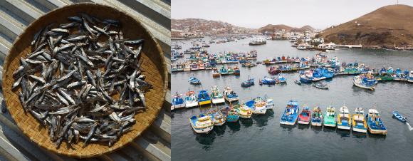 מנה של דגי אנשובי מיובשים ומאות ספינות דיג בנמל בלימה | צילומים: Stografi, Christian Vinces, Shutterstock