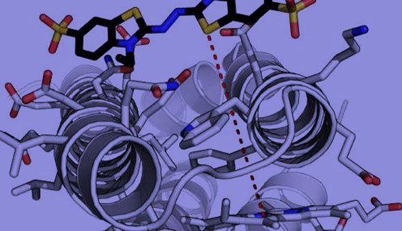 הדמיה של אנזים שתוכנן במחשב נקשר למולקולת היעד | מקור: Ross Anderson, University of Bristol