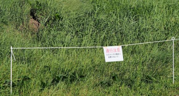 לא כדאי להתקרב. גידור ושלט אזהרה ליד קן של הצרעות סמוך לעיר ריטו ביפן | צילום: Greg Peterson/Flickr