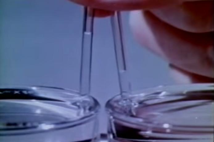 עליה נימית של מים (שמאל) ואלכוהול (ימין) בתוך צינורות זכוכית דקיקים | מקור: ויקיפדיה, צילום: גיא בלס