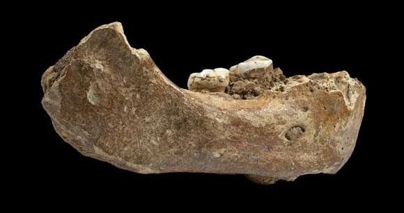 עצם לסת של אדם דניסובי | דונג-ז'ו ז'אנג וז'אן ז'אק הובלן