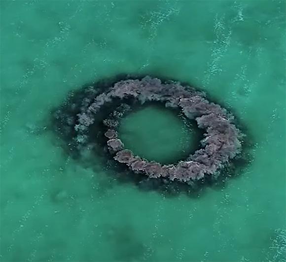 טבעת הבוץ של הדולפינים. מקור: Hol Chan Marine Reserve and Corozal Bay Wildlife Sanctuary