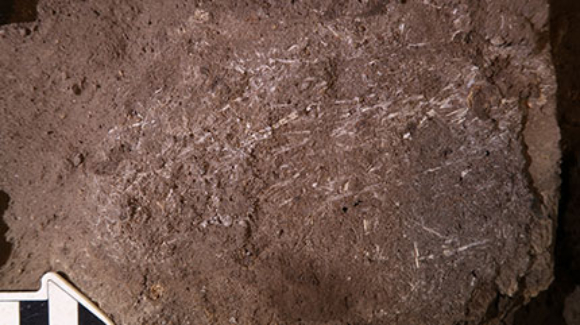 פיסות עשר מאובנות שנמצאו בחפירות במערת בורדר | צילום: Lee Wadley, Wits University