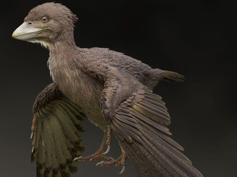 fukuipteryx-prima_Masanori Yoshida.jpg