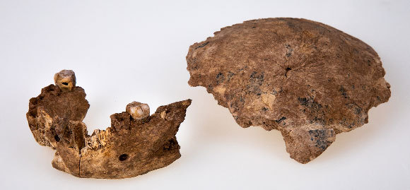 הממצאים מאתר נשר רמלה | אילן טיילר ואבי לוין, הפקולטה לרפואה של אוניברסיטת תל-אביב