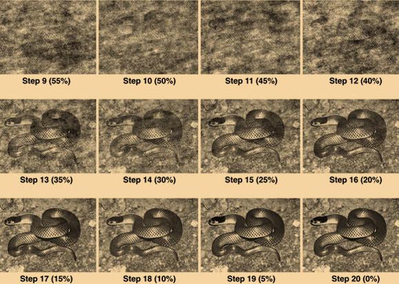 בולט מאוד עד מוסווה מאוד. כמה מתמונות הנחשים ששימשו במחקר על קוף המקוק היפני | מקור: PLoS One