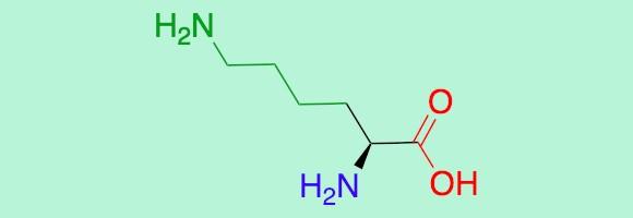 חומצת האמינו ליזין: חומצה (באדום), אמין (סגול) ושייר (ירוק) | איור: דניאל זיידמן