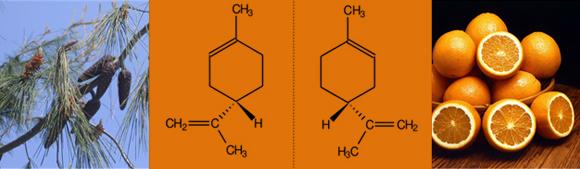 לימונן ימני נותן ריח של תפוז, לימונן שמאלי יוצר את ריח האורנים. מקור: ויקיפדיה