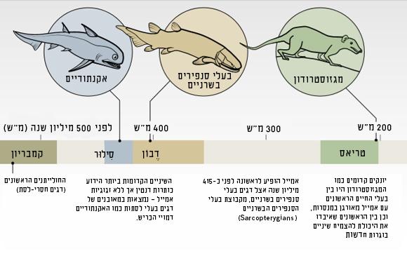 תרשים אבולוציה של השיניים