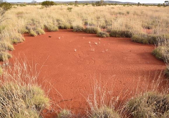מעגל פיות גדול באוסטרליה | Stephan Getzin