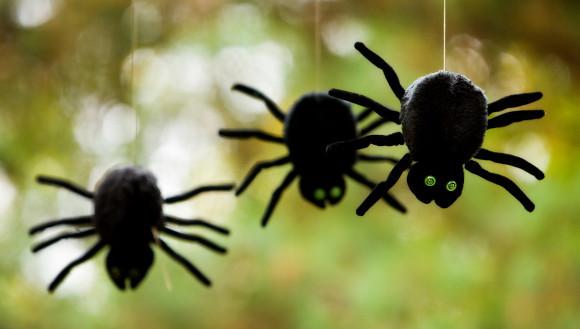 שלוש בובות עכביש | צילום: Michelle D. Milliman / Shutterstock