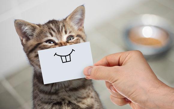 האם החתול באמת מחייך? לא. אבל יש אנשים שמסוגלים לזהות רגשות חתוליים על פי פניהם | צילום: Shutterstock