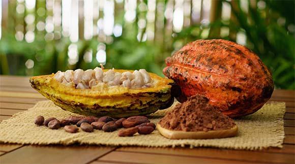 מסע ארוך ומורכב בדרך לשוקולד: פרי הקקאו, פולים קלויים ואבקת קקאו | צילום: Sergey Saulyak, Shutterstock