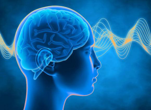 אילוסטרציה של גלי מוח | Shutterstock, Illustration Forest