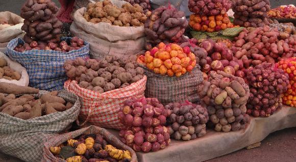 מגוון זנים של תפוחי אדמה בשוק |  צילום: HMEDIA, Shutterstock