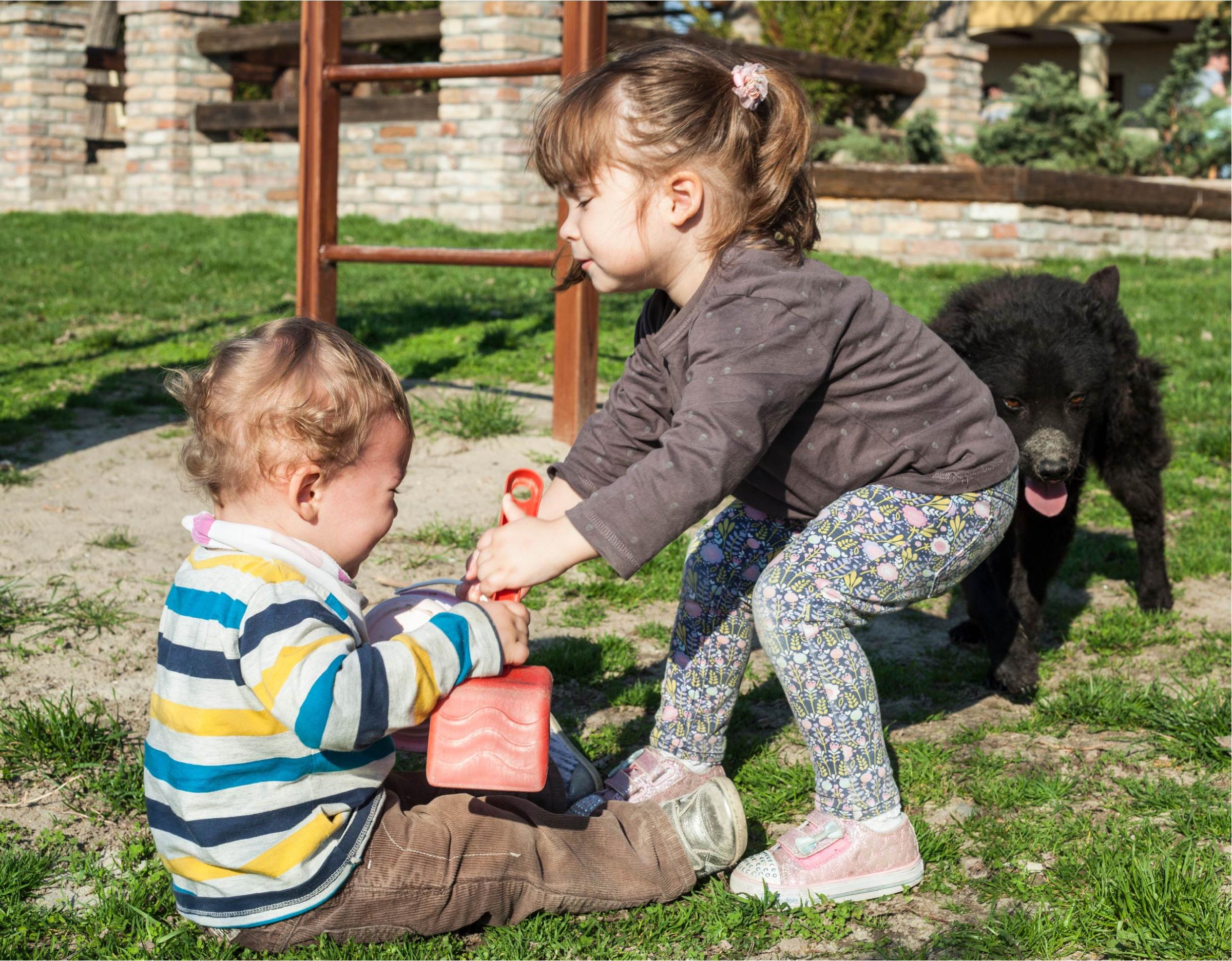 אח ואחות רבים על צעצוע | Shutterstock, Dragana Djorovic