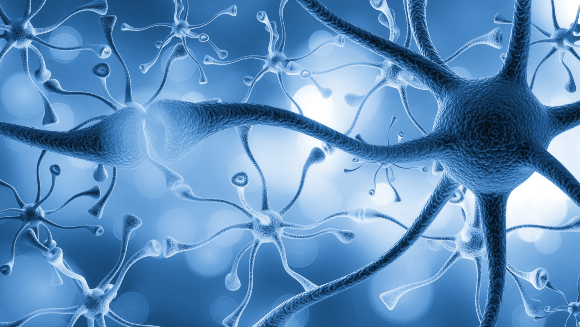 רשת של תאי עצב והקשרים ביניהם | איור: Billion Photos, Shutterstock