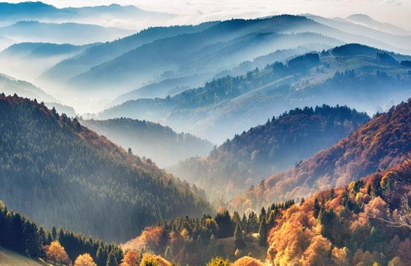 לקרקע ביער אקלים משלה. ערפל ביער השחור בגרמניה | צילום: Funny Solution Studio, Shutterstock