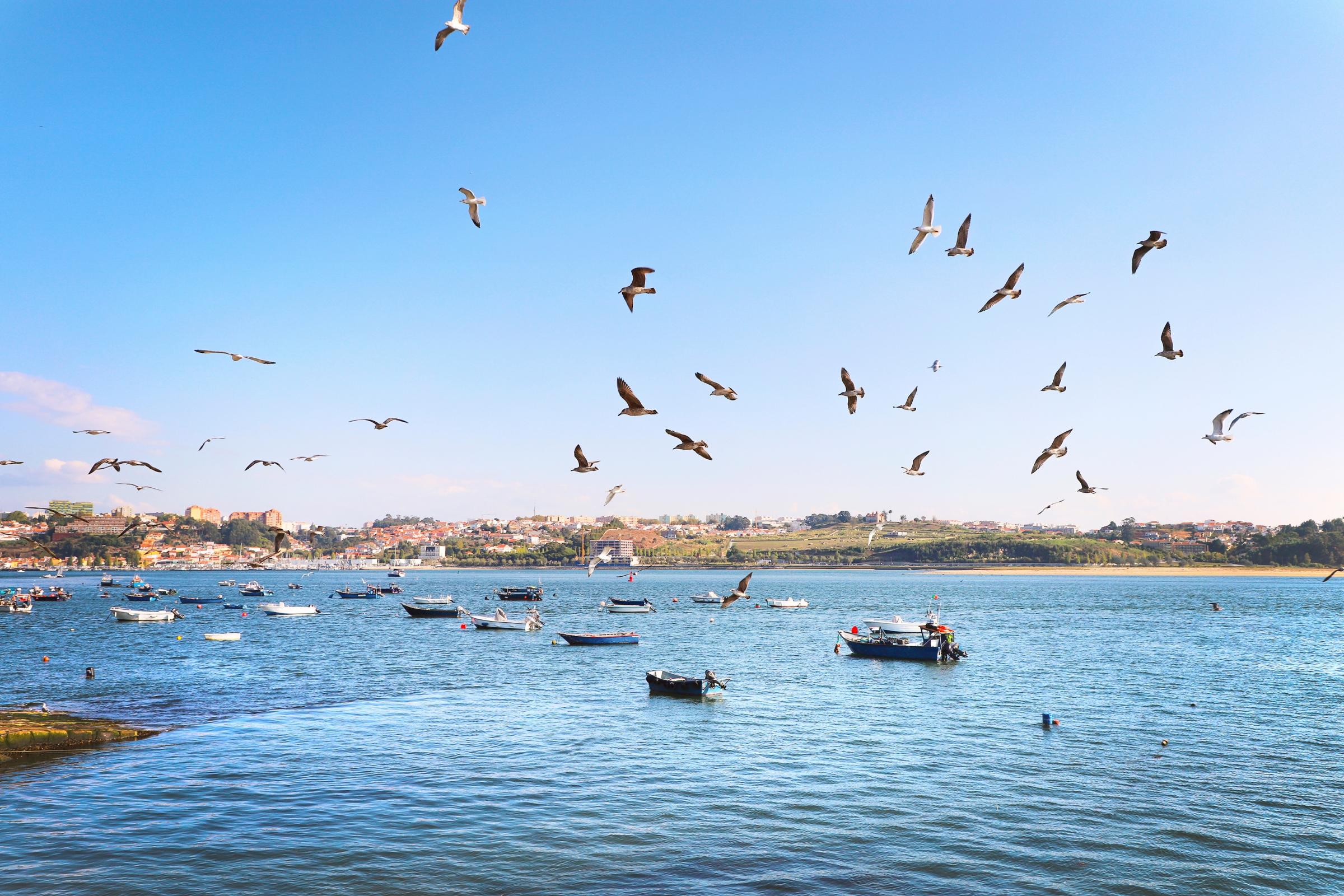 אלבטרוסים נמשכים לסירות דייג | shutterstock