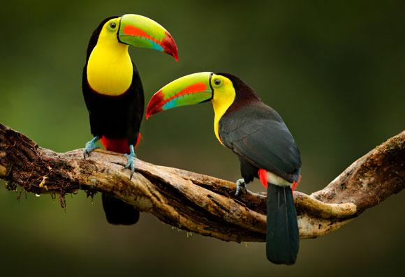 החיה שהפכה את הבטיחות לנוחות. טוקן   צילום: Shutterstock