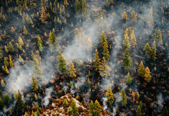 שריפת יער בסיביר | צילום: Sergey Filinin, Shutterstock