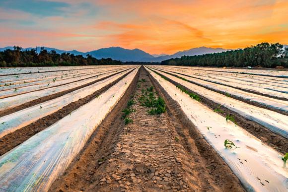 האקוויפר הגדול הוא מקור מים חשוב לחקלאות המדברית. גידולים חקלאיים בערבה | צילום: Shutterstock