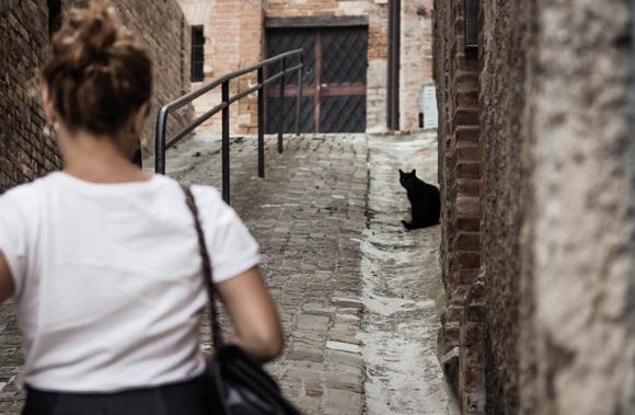 בחורה צועדת בשביל מול חתול שחור | Shutterstock, The Curious Pirate